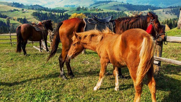 Прогулянки по Буковелю на конях